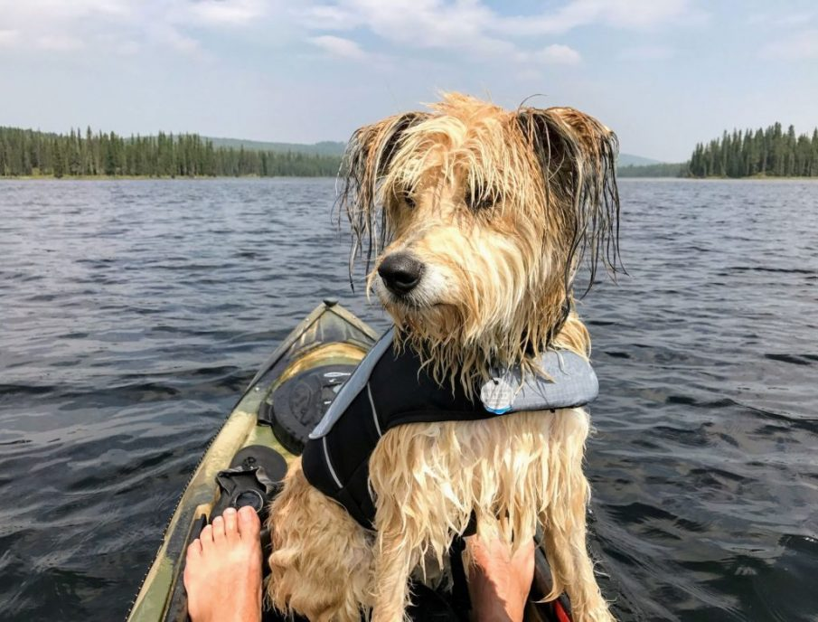 kayaking, wet dog