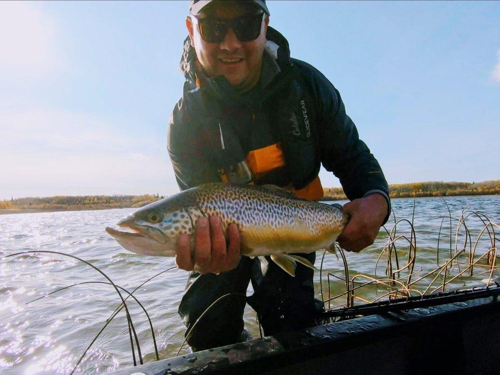 Tiger trout of Alberta